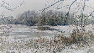 Staw zimą- foto Anna Pakuła