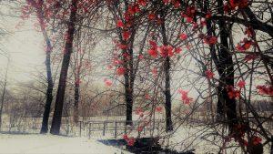 tajemniczy-ogrod-falenty-foto-anna-pakula